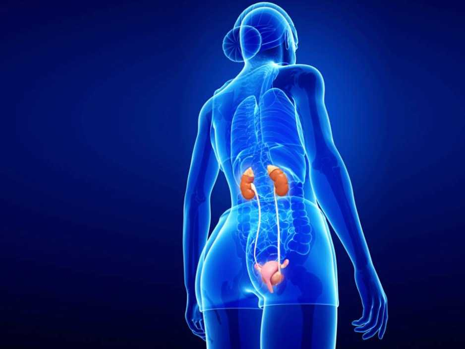 How much do you really know about your Kidneys?